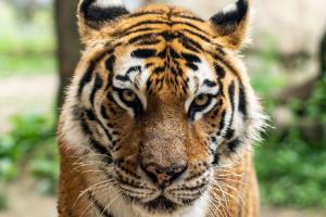 Τίγρης 136ΚΒ Bελτιστοποίηση Φωτογραφίας